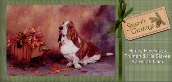 What a handsome Basset