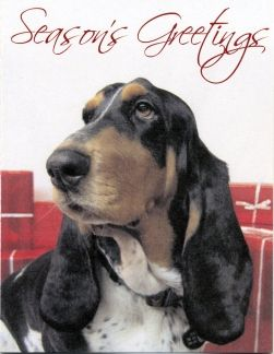 One of our Basset cards from Canada, Stella