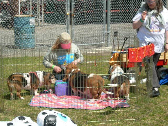 Debbie and Diana Grove with the hounds at the BoardWaddle picnic.