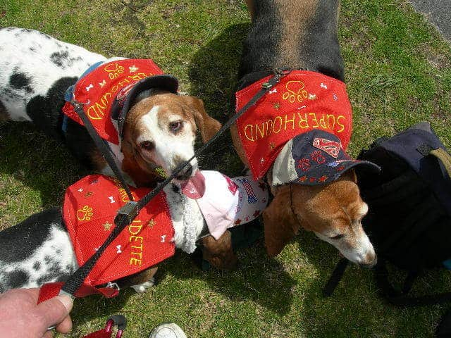 Proud houndies in their BoardWaddle costumes